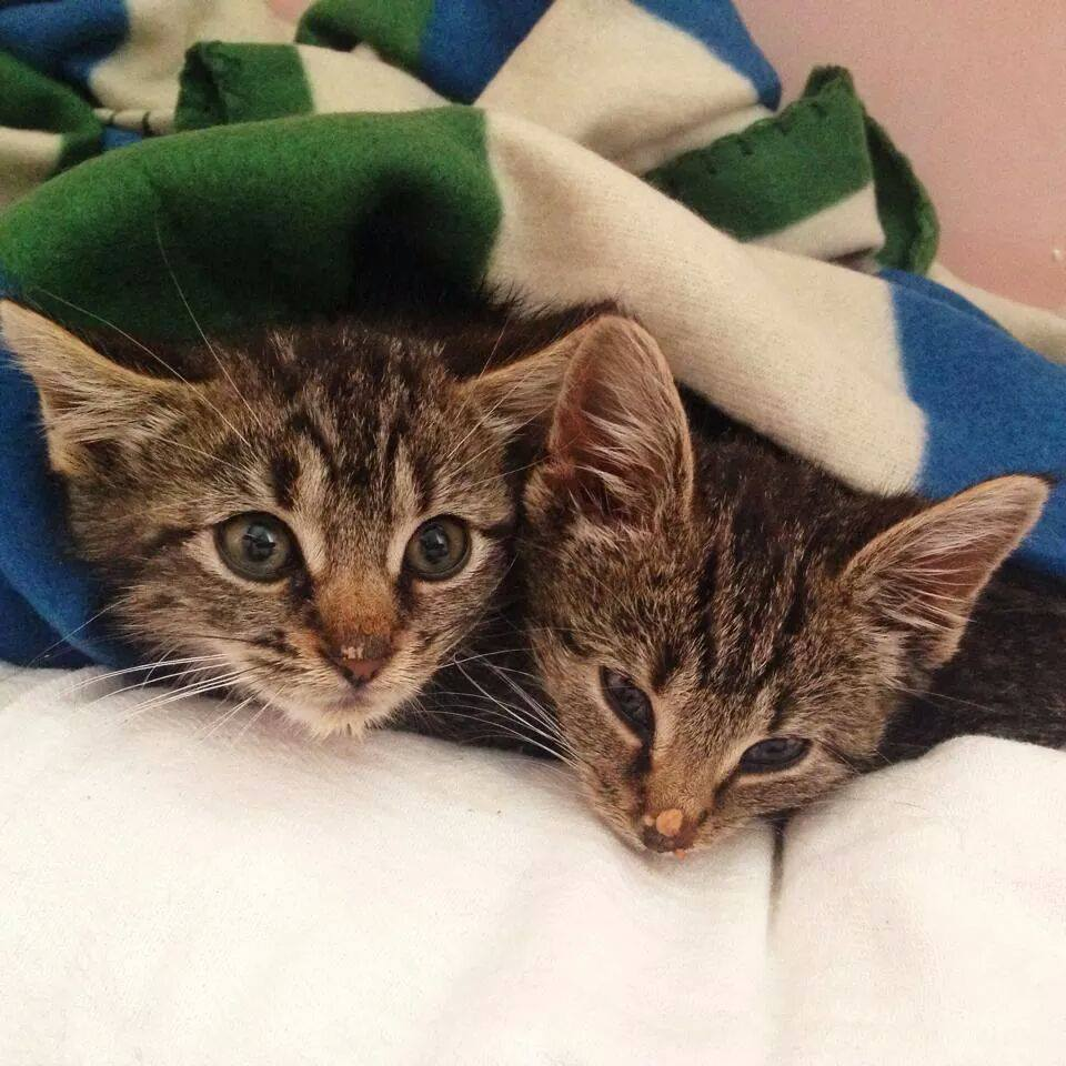 Two of the kittens Paul rescued