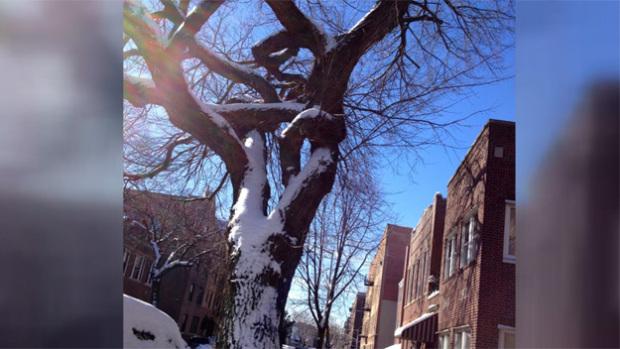 astoria_tree_cut_down_0323