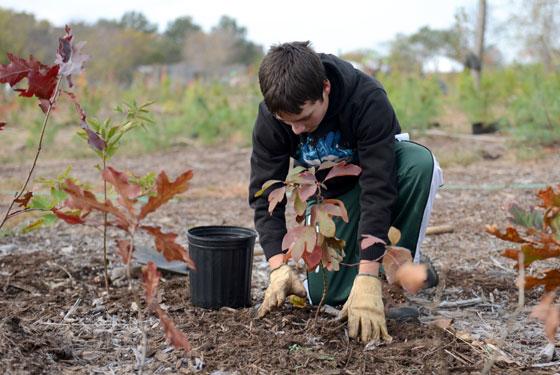 spring-2015-tree-care