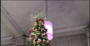 kaufman_tree_lighting
