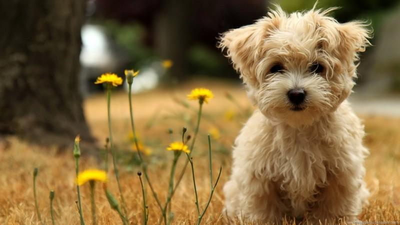 4087-happy-dog-800x600.jpg
